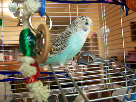 Budgie Names